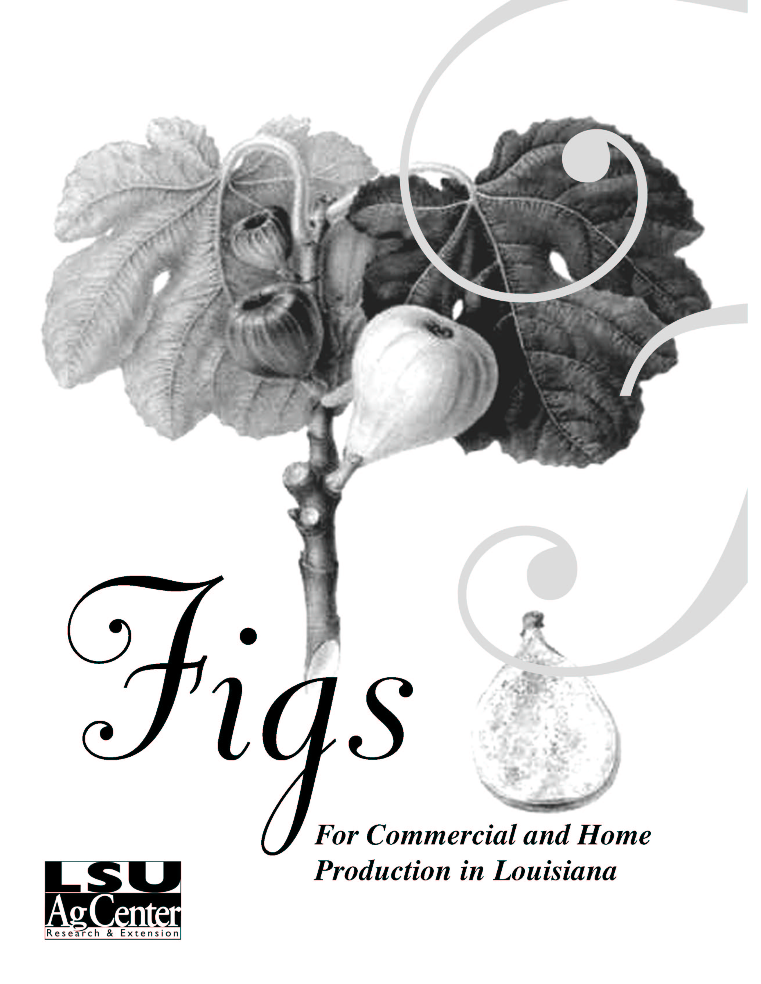 Figs for Commercial and Home Production in Louisiana