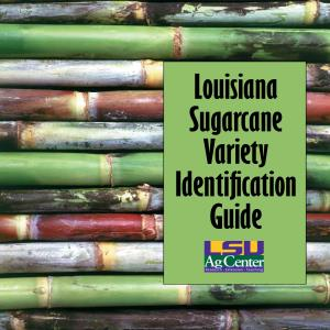Sugarcane Variety Identification Guide