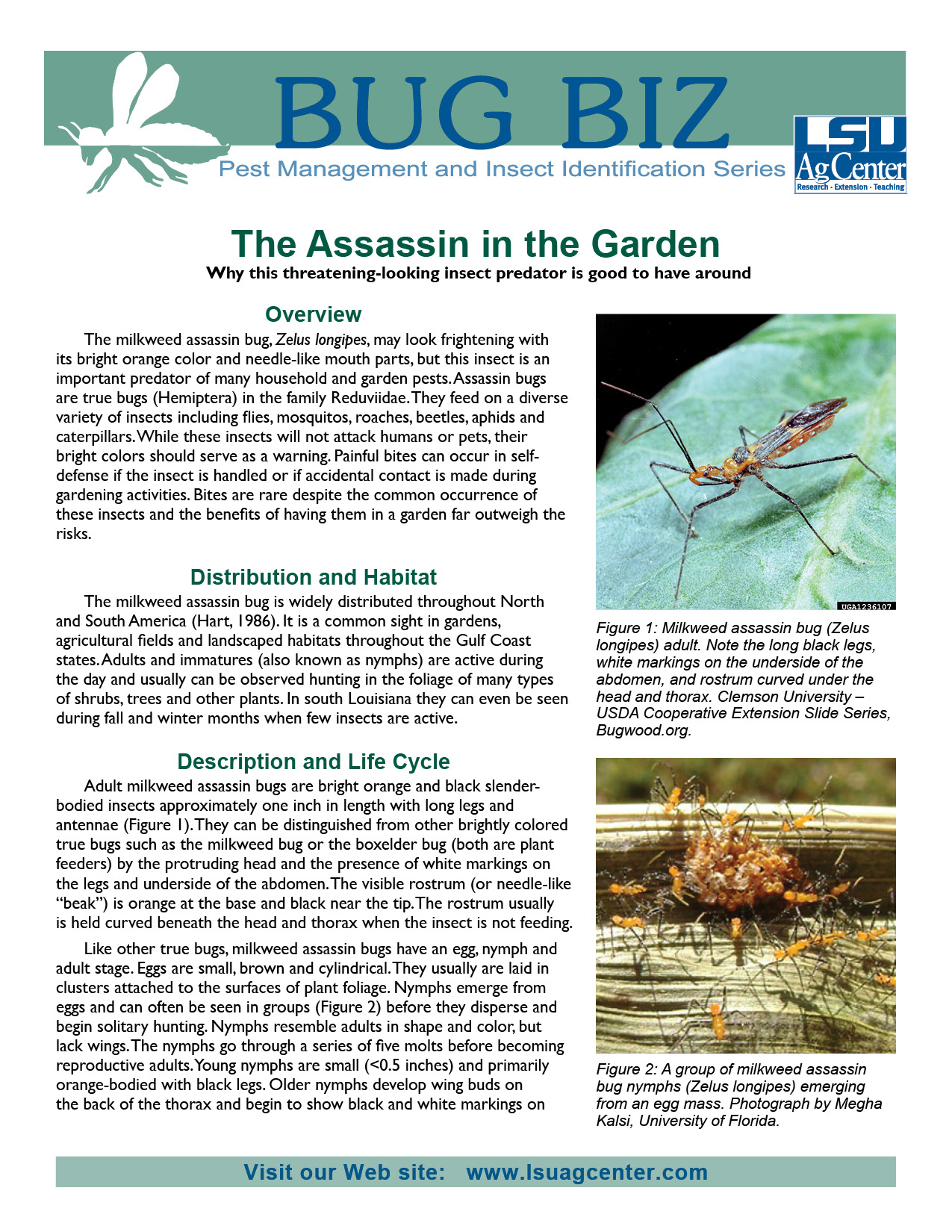 The Assassin in the Garden