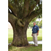 LSU AgCenter forester wins national award