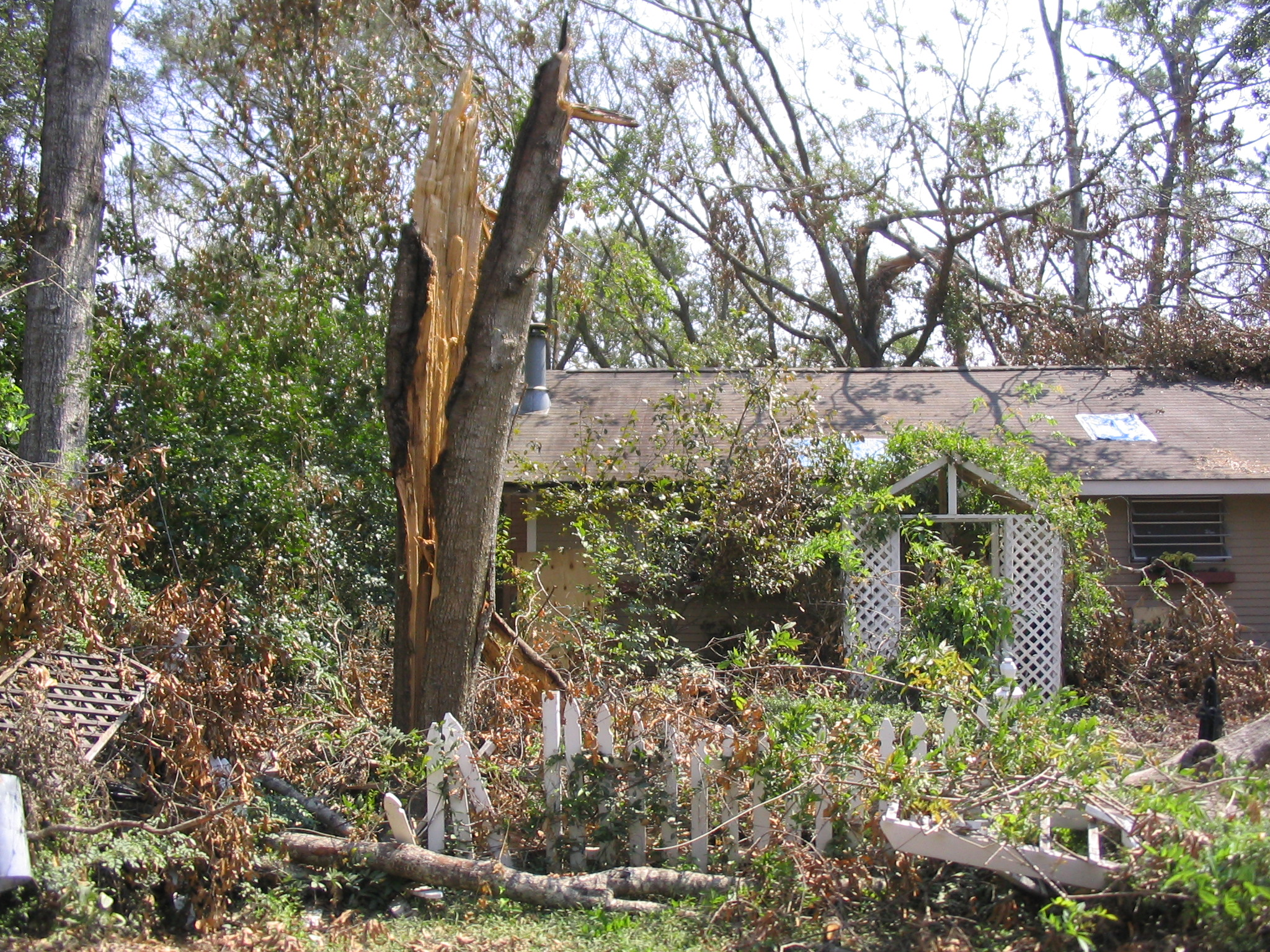 Summer storms and hurricanes are coming: check your trees