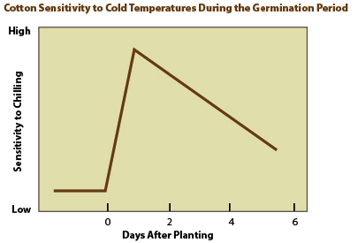 graph Cotton sensitivity to cold temperature during germination periodjpg