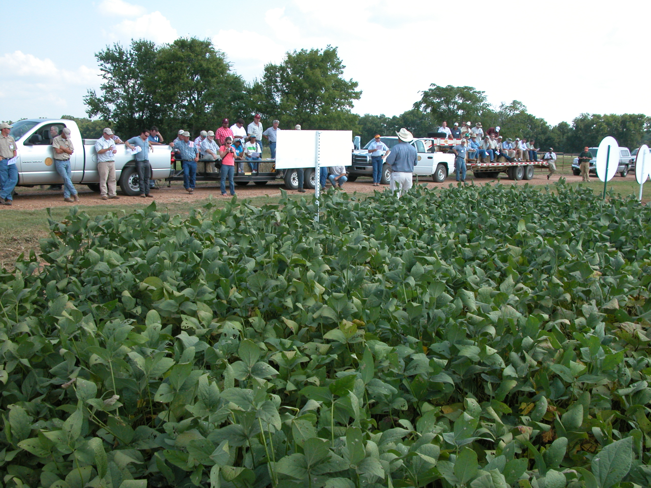 LSU AgCenter field day expo set for June 19 in Winnsboro
