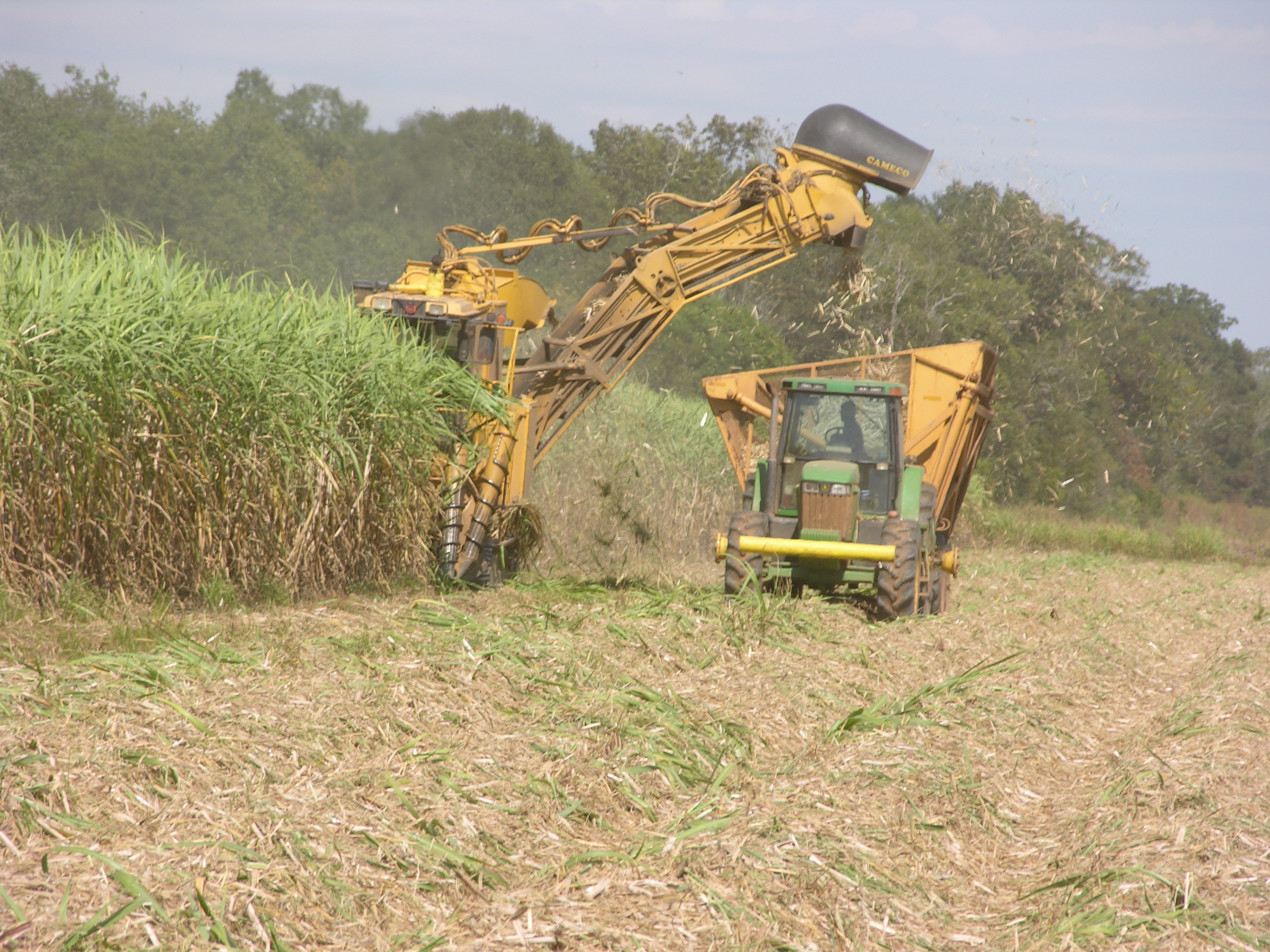 Despite storms, sugarcane harvest better than expected