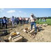 Collaborative relationships help sustain Louisiana sweet potato industry