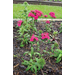 2003-04 Landscape Performance Bedding Plants and Herbaceous Perennials
