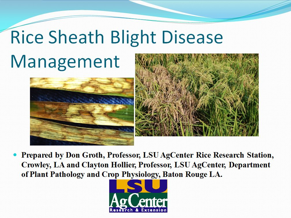 Rice Sheath Blight Disease Management 2013