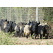 Feral hog damage topic of workshop