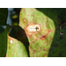 Leaf Spot on Cotton Revisited