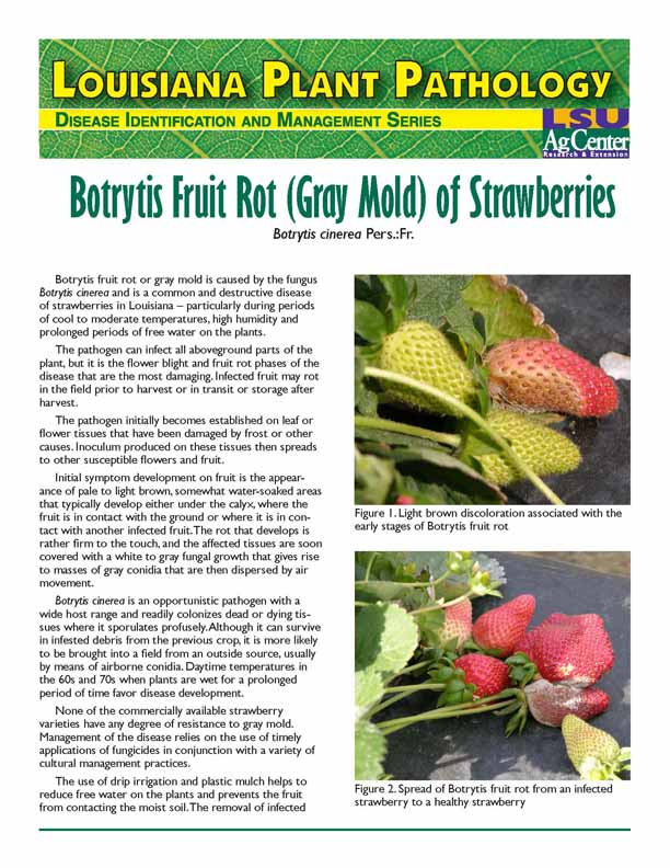Louisiana Plant Pathology:  Botrytis Fruit Rot (Gray Mold) of Strawberries