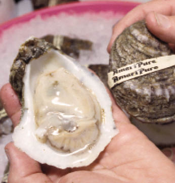 Photo of an oyster