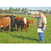 Researchers evaluate new cattle breeds for Louisiana climate