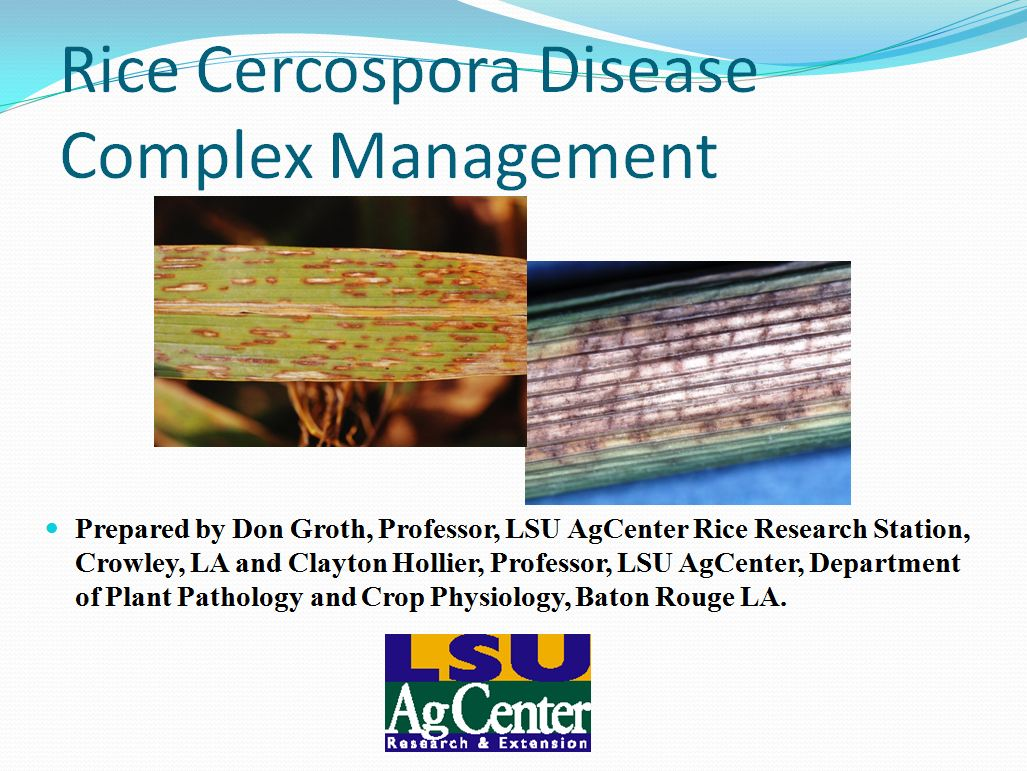 Rice Cercospora Disease Complex Management 2013
