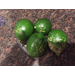 Damaged Citrus Fruit