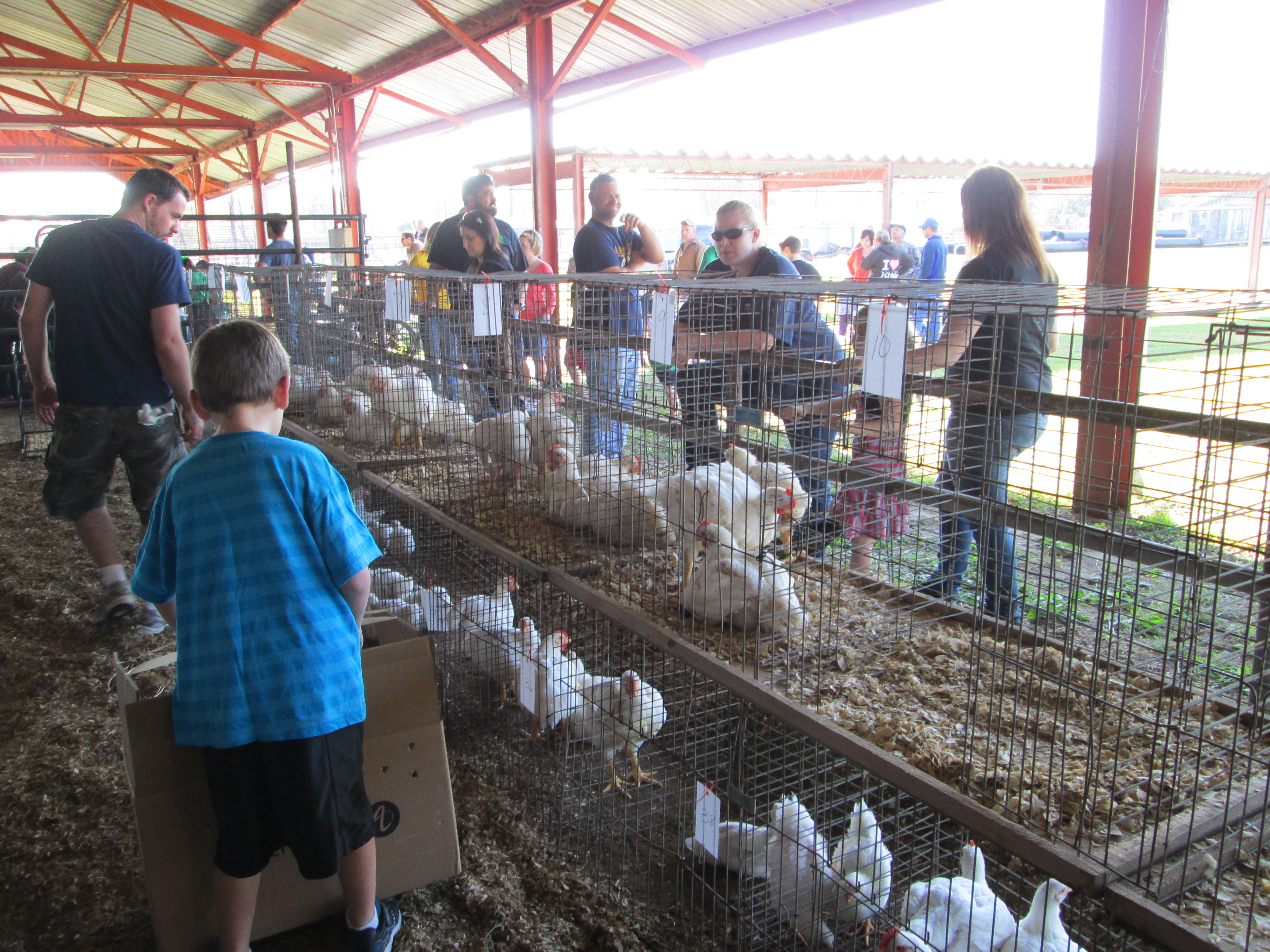 Pet and Poultry Day
