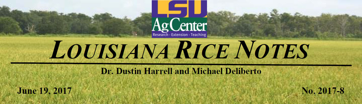 2017 Louisiana Rice Field Notes #8