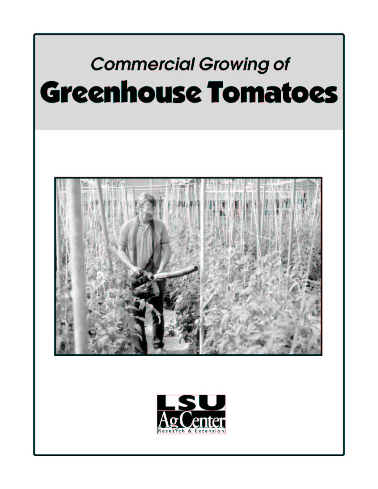 Commercial Growing of Greenhouse Tomatoes