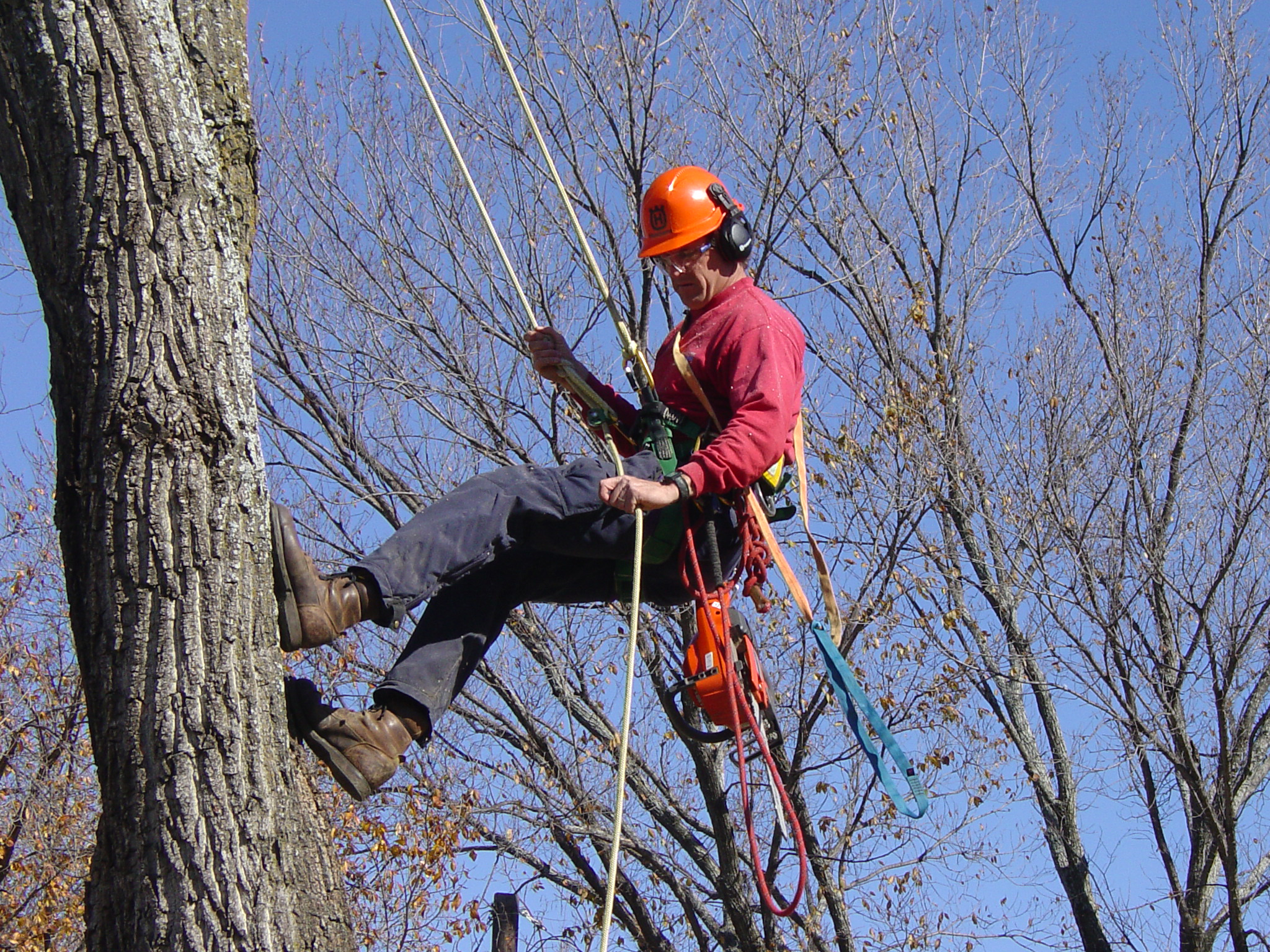 Tips For Selecting An Arborist