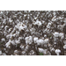 Storms slowed cotton harvest