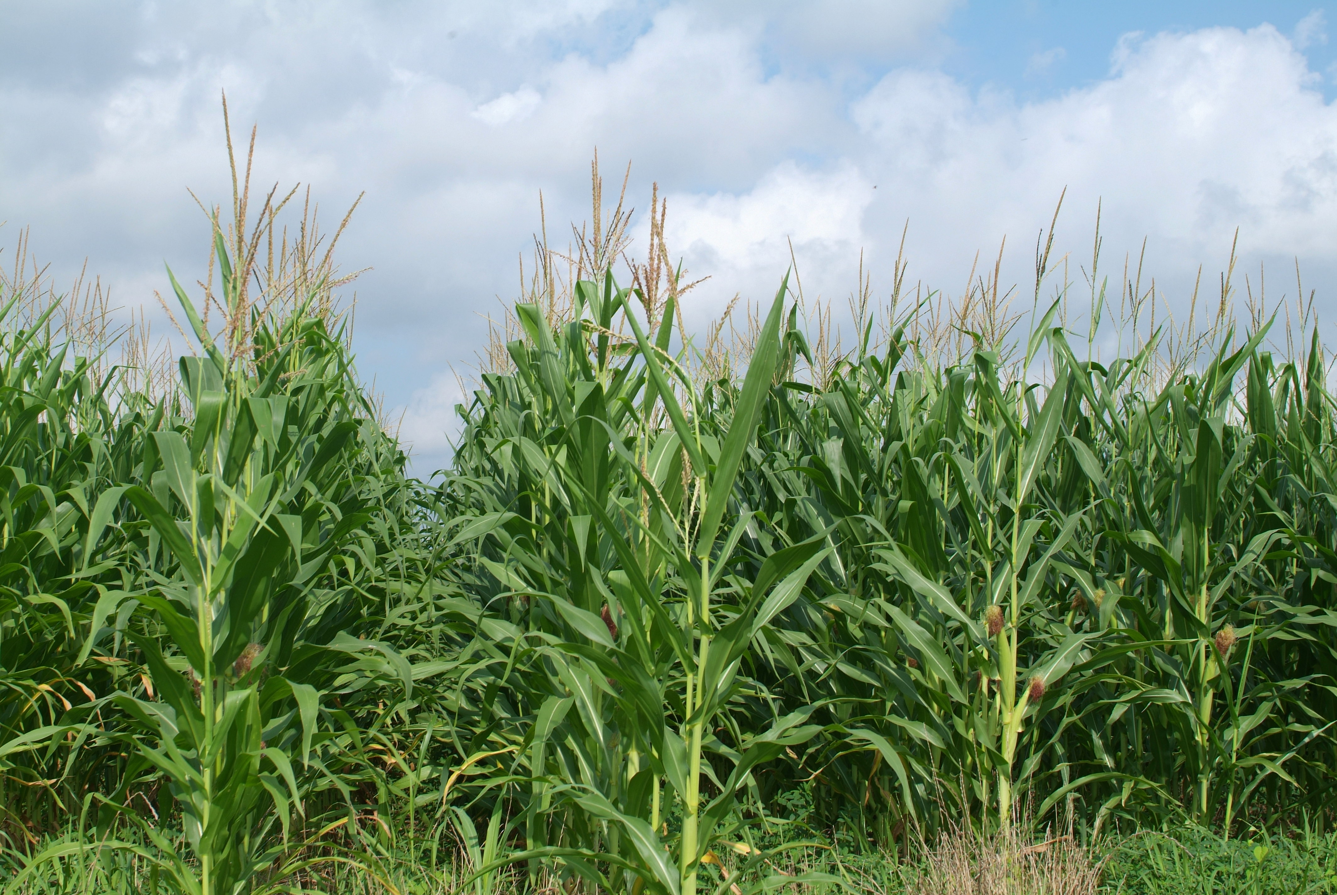 Crops field day set for July 14 in Alexandria