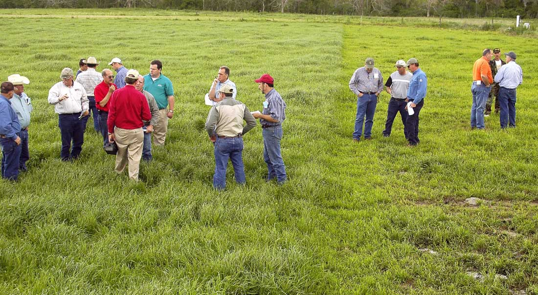 Forage Field Day Participants Learn Clover Can Improve Cattle Profits