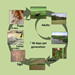 Rice Water Weevil Life Cycle