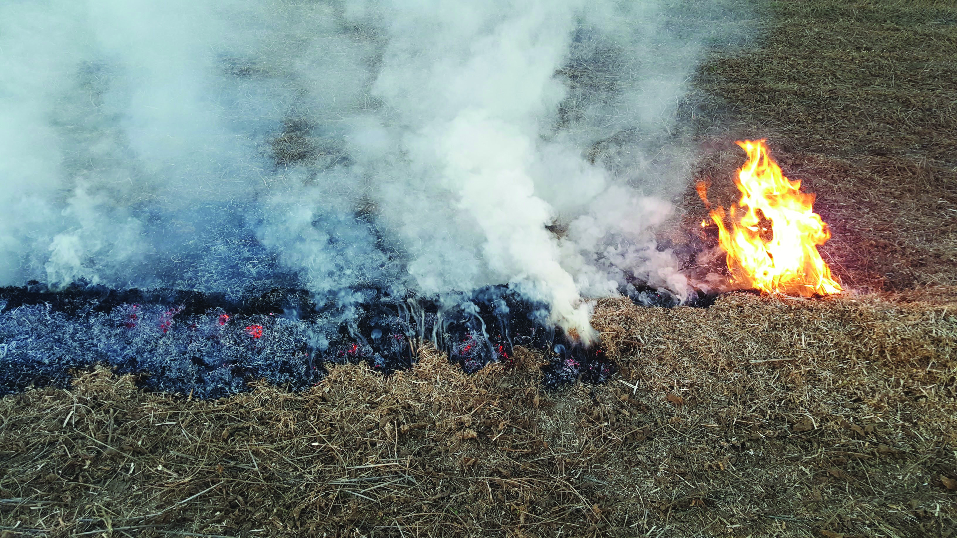 windrow burning.jpg thumbnail