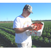 Despite recent cold snap, La. strawberries off to fast start