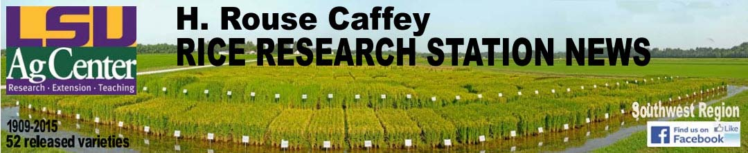 2017 H. Rouse Caffey Rice Research Station Newsletters