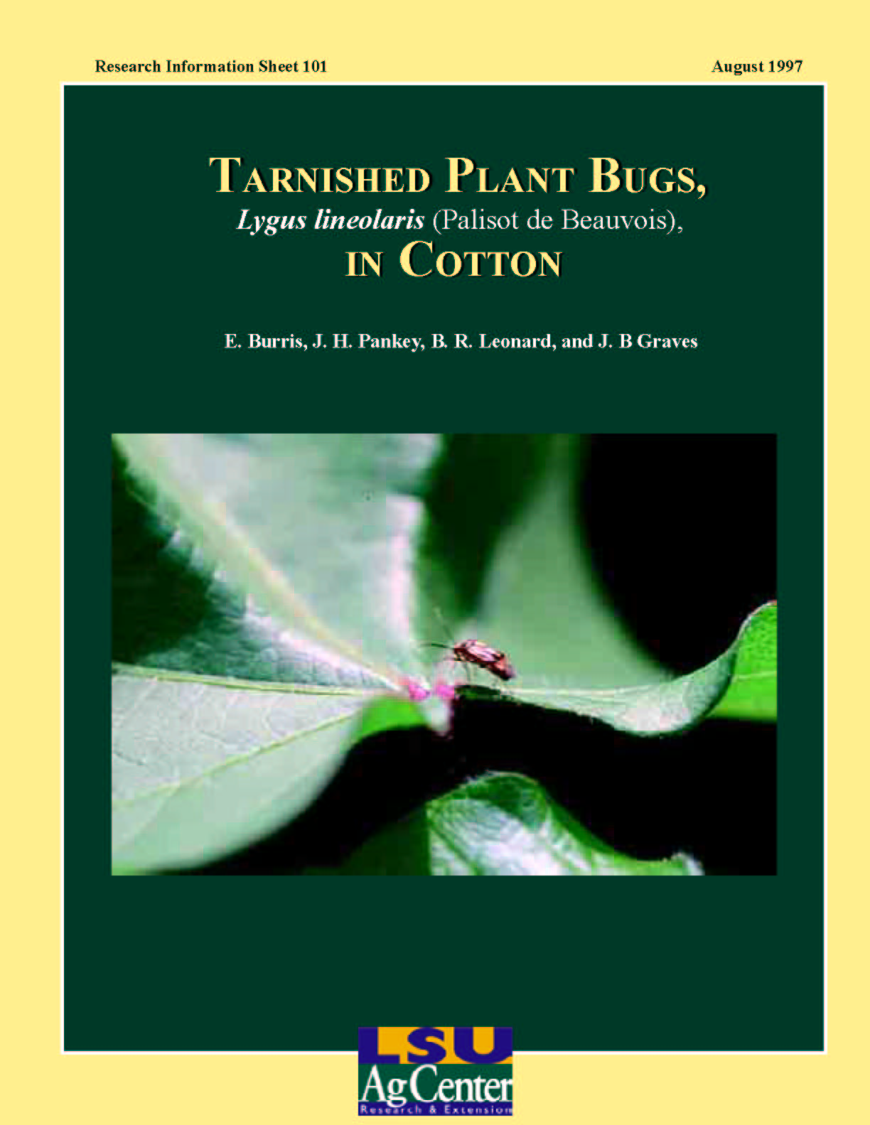 Tarnished Plant Bugs in Cotton (August 1997)
