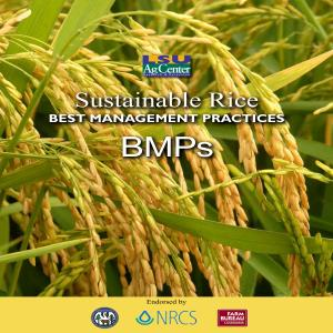 Sustainable Rice Best Management Practices