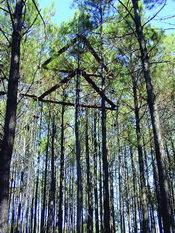 Long-term Assessment of Pine Plantation Productivity in Louisiana