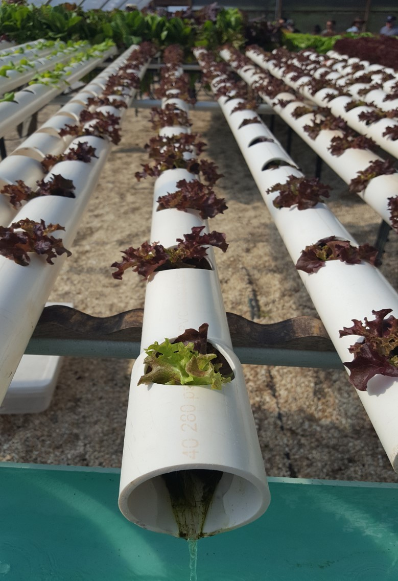 Hydroponics is also known as soilless gardening