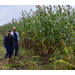 Researchers receive grant to develop products from sorghum