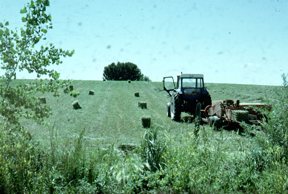 Toxicants in Feeds, Hay and Forages