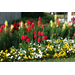 Consider Color When Planting Flowerbeds