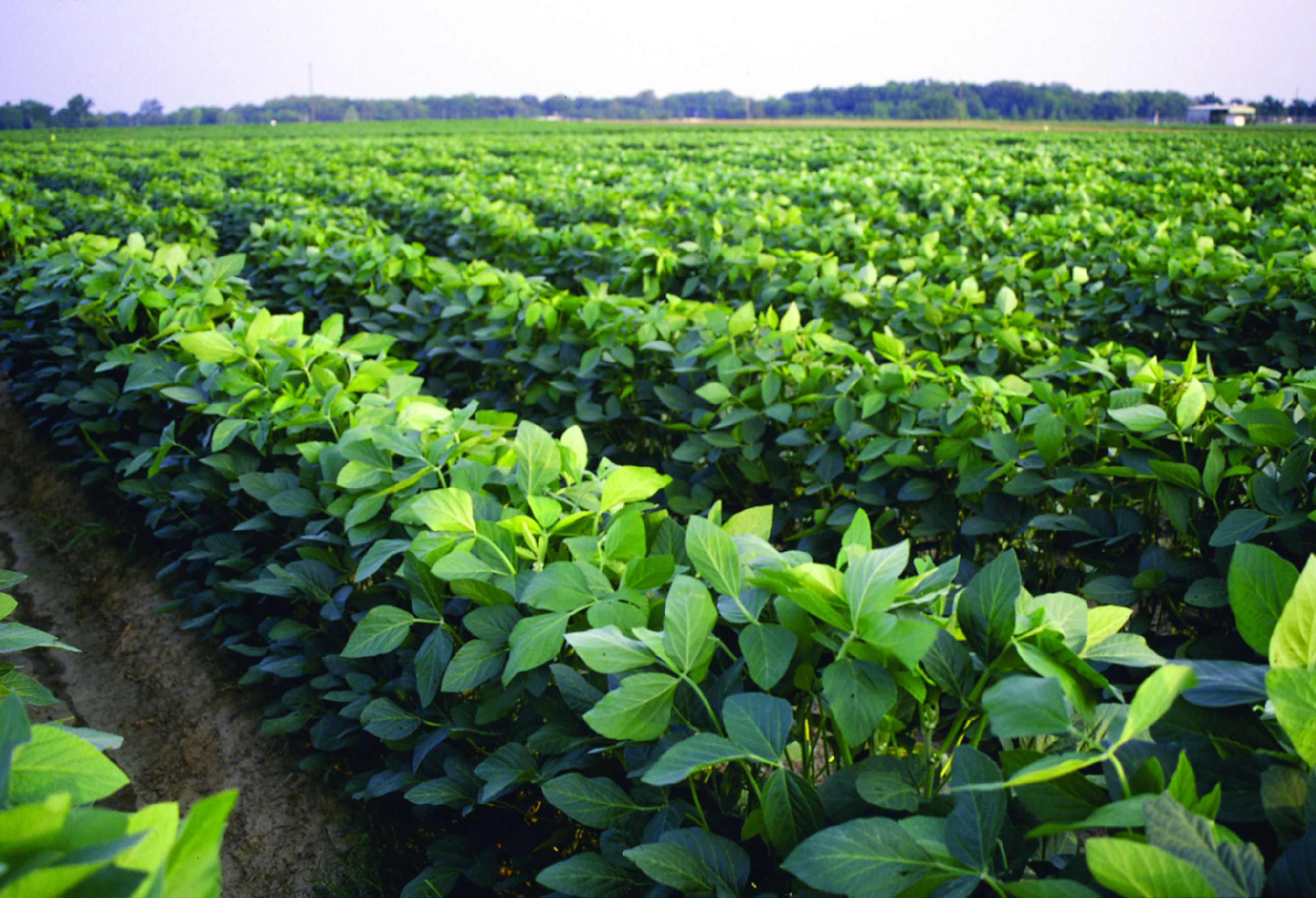 Tri-State Soybean Forum set for Jan. 5 in Oak Grove