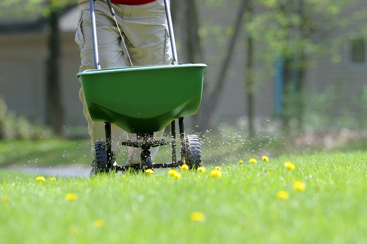 fertilizing lawnjpg