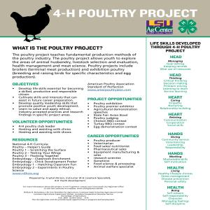 4-H Poultry Project
