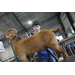 Learning opportunities fun times abound at LSU AgCenter Livestock Show