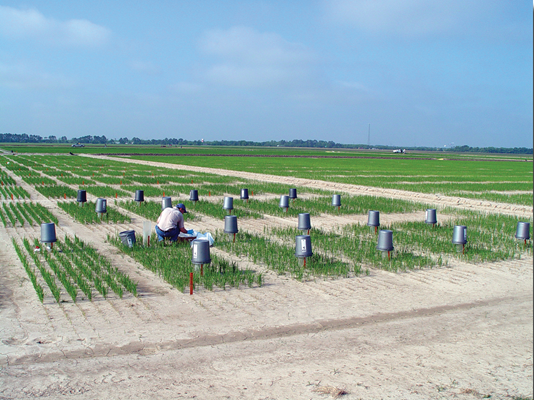LSU AgCenter agronomist Dr. Dustin Harrell prepares an experiment at the Rice Research Station