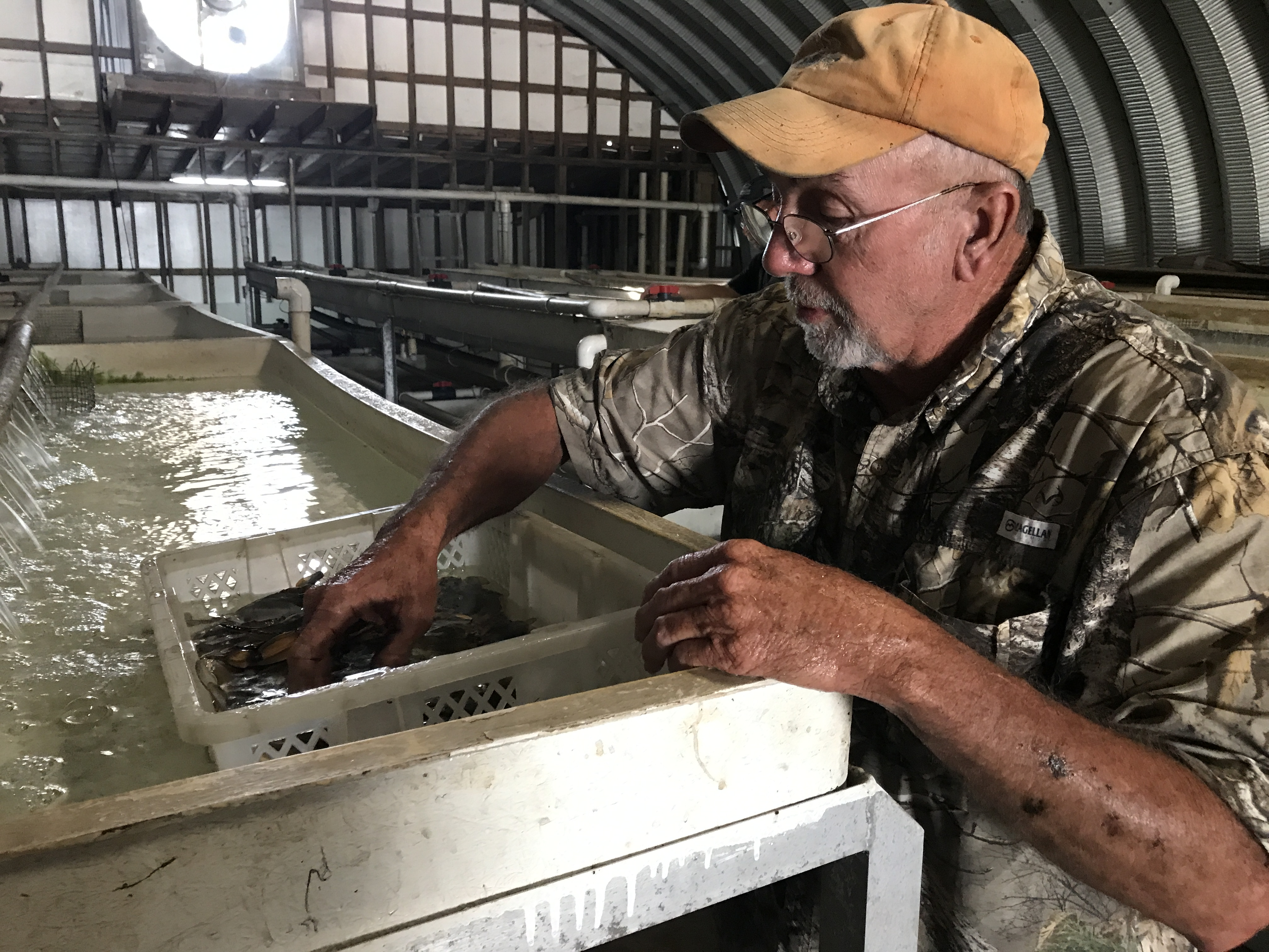 Reviving The Soft Shell Blue Crab Industry