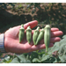 Add heat-tolerant veggies to your garden