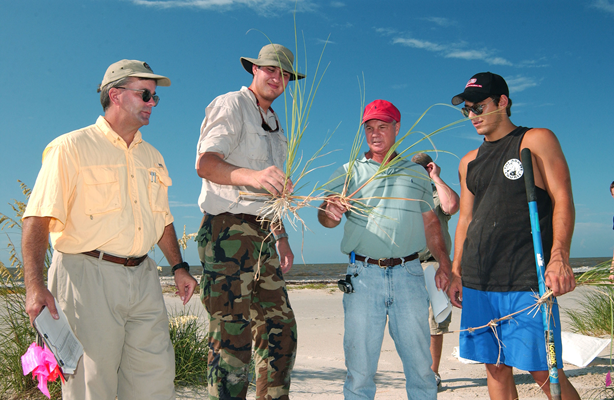Researchers examine sea oat plants