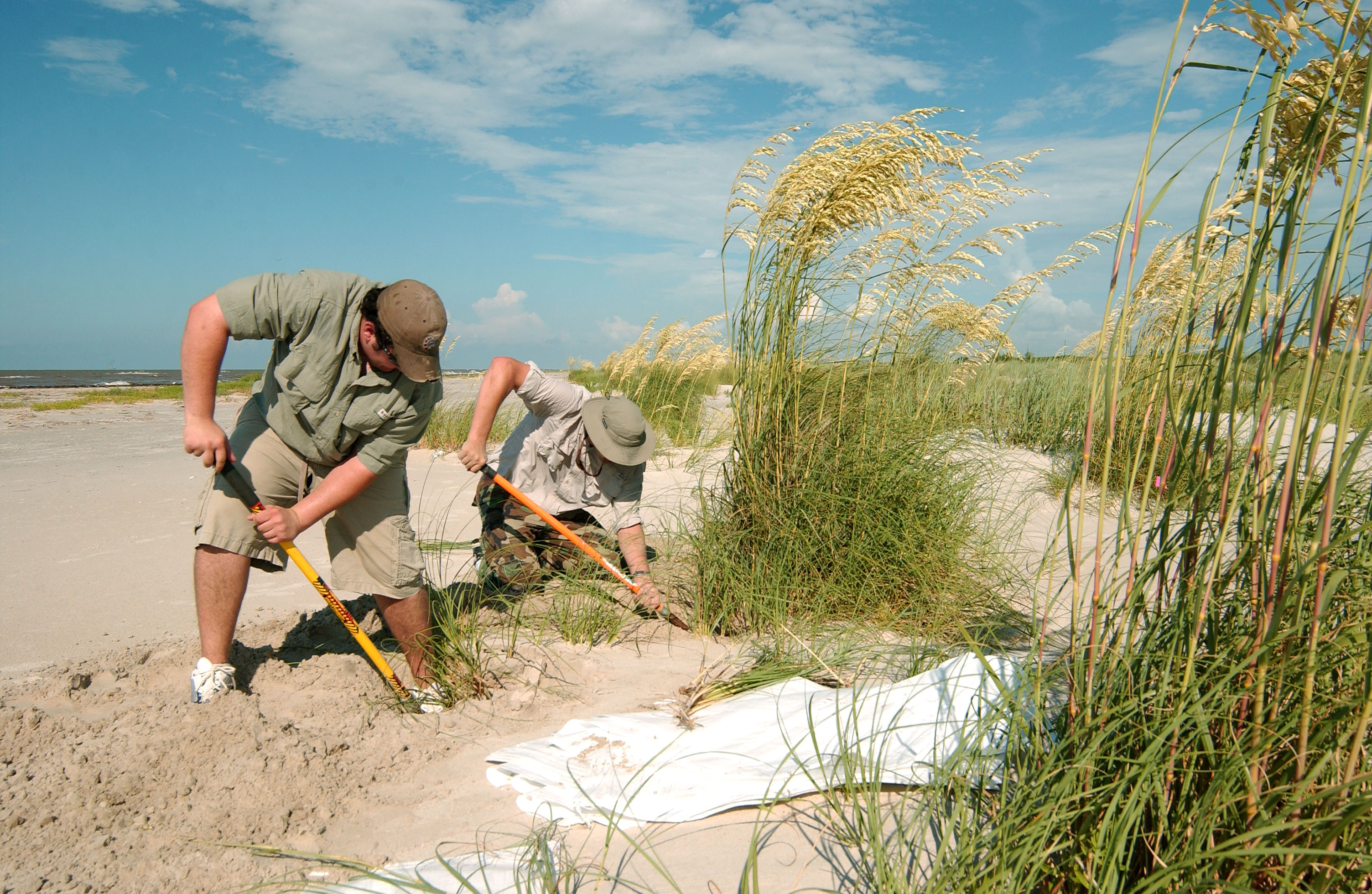 Students dig up sea oats