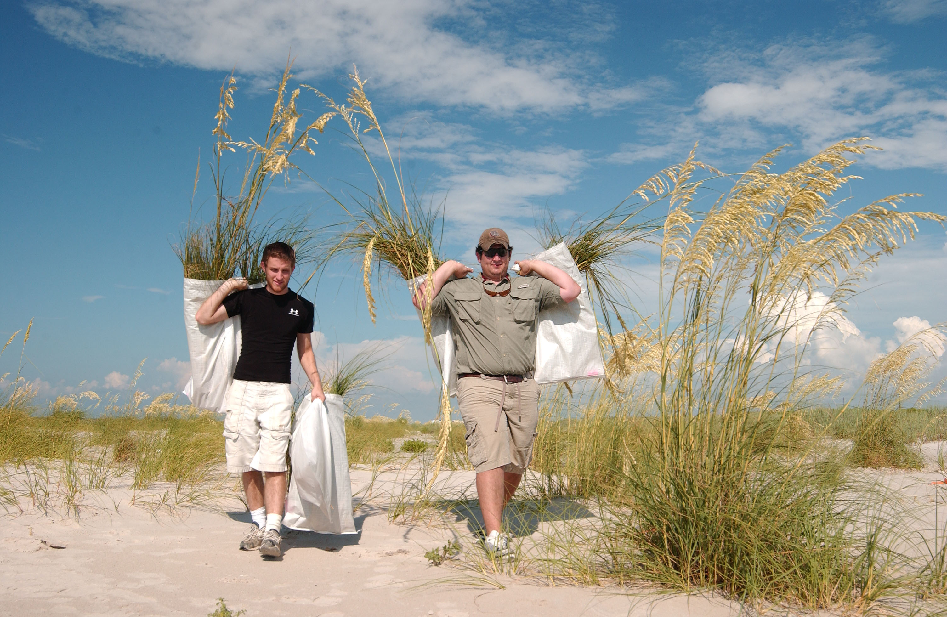 Students carry sea oat plants that are part of coastal restoration research