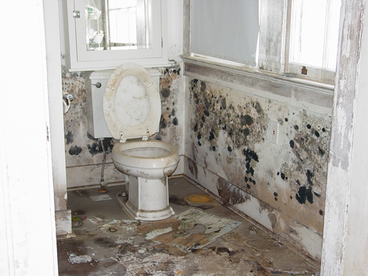 white mold in bathroom mold and remediation 21569