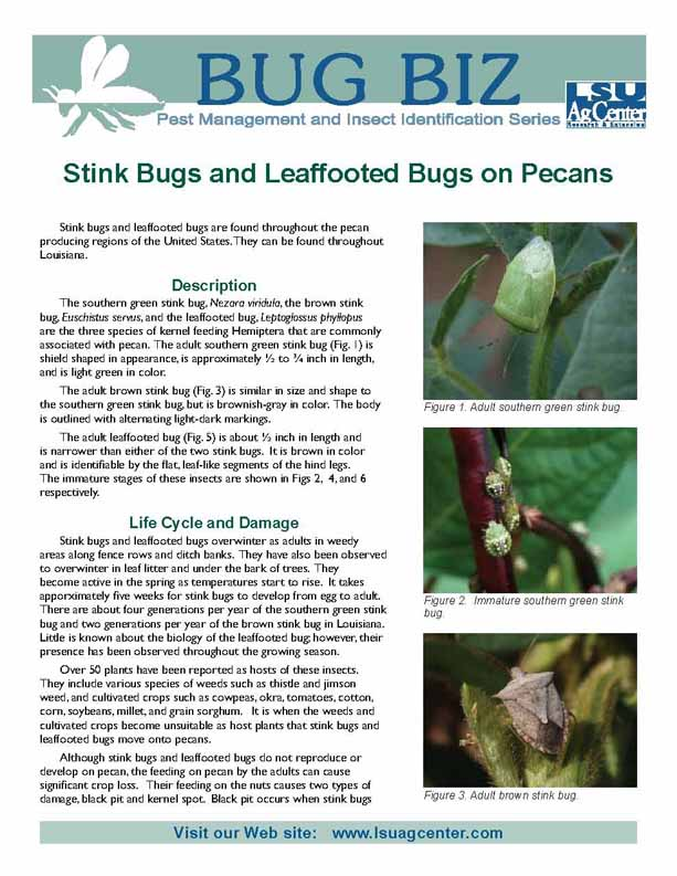 Bug Biz:  Stink Bugs and Leaffooted Bugs on Pecans