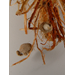 Rice Water Weevil Pupal Case 2