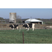 Nutrition research helps dairy farmers